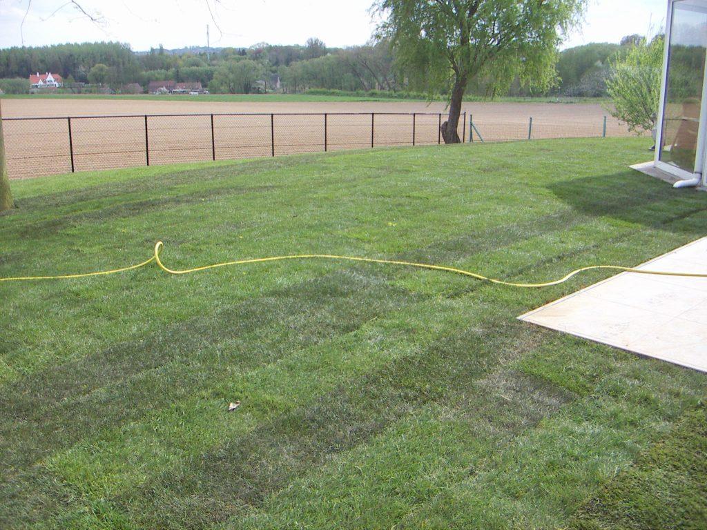 Green Garden - Aanleg gazon + beplanting 0
